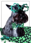 Shamrock Scottie Card
