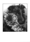 Scottie Puppy and Kitten Card