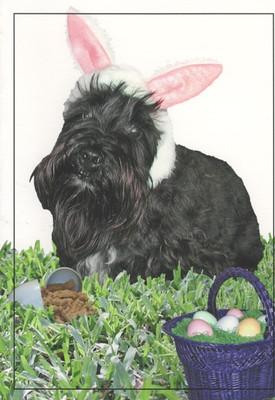 Scottie Bunny