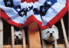 Patriotic Westies Card
