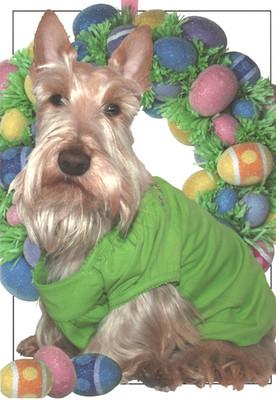 Scottie Easter Card
