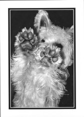 """No! No"" Not the Silent Treatment!"" Westie Card"
