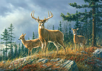 Autumn Whitetail Mural