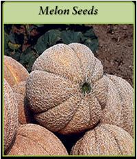 -melon-seeds-logo.png