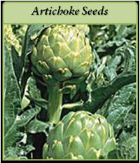 artickoke-seeds-logo.png