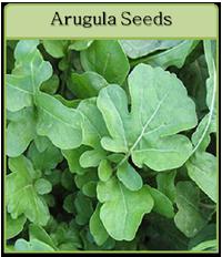 Arugula Seeds