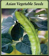 asian-vegetable-seeds-logo.png