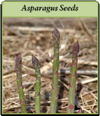 asparagus-seeds-logo.png