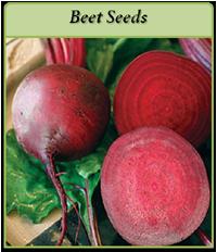 beet-seeds-logo.png