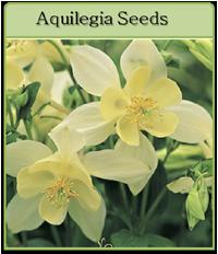 Aquilegia Seeds