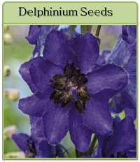 Delphinium Seeds