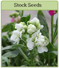 Stock Seeds
