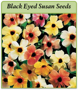 black-eyed-susan-seeds-logo.png