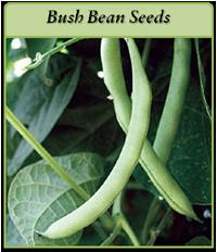 bush-bean-seeds-logo.png