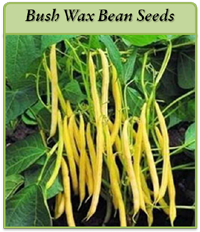 bush-wax-bean-seeds-logo.png