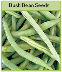 Bush Bean Seeds