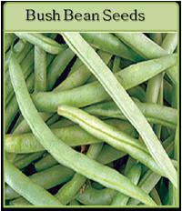 Bush Bean Seeds