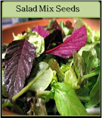 Salad Mix Seeds