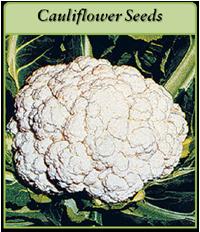 cauliflower-seeds-logo.png