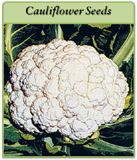 cauliflower-seeds-logo.png