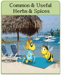 Common & Useful American Herbs & Spices