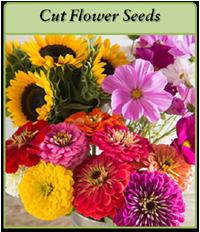 cut-flower-seeds-logo.png