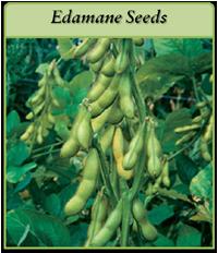 edamame-seeds-logo.png