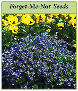 forget-me-not-seeds-logo.png