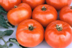 free-heirloom-red-tomato-seeds.png