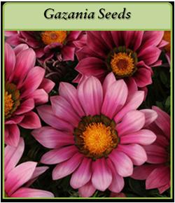 gazania-seeds-logo.png