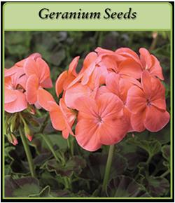 geranium-seeds-logo.png
