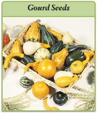gourd-seeds-logo.png