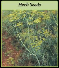 herb-seeds-logo.png