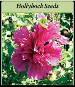 hollyhock-seeds-logo.png