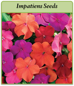 impatiens-seeds.png