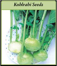 kohlrabi-seeds-logo.png