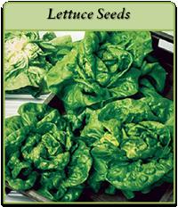 lettuce-seeds-logo.png