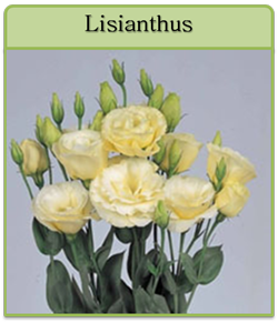 Lisianthus Cut Flower Seeds