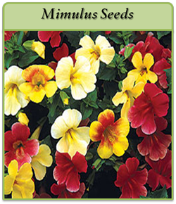 mimulus-seeds.png