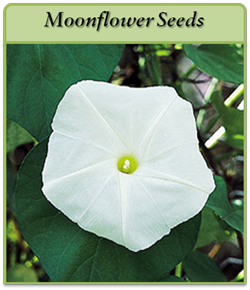 moonflower-seeds.png