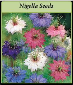 nigella-seeds.png