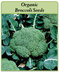 organic-broccoli-seeds-logo.png