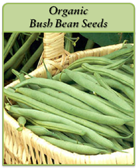 organic-bush-bean-seeds-logo.png
