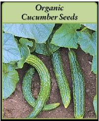 organic-cucumber-seeds-logo.png