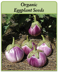 organic-eggplant-seeds-logo.png