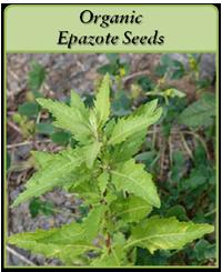 Organic Epazote Seeds