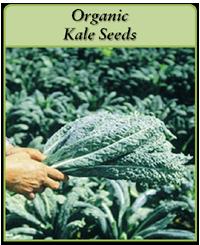 organic-kale-seeds-logo.png