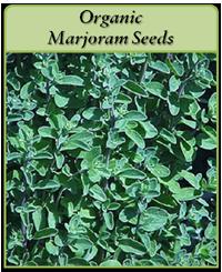Organic Marjoram Seeds