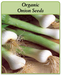 organic-onion-seeds-logo.png