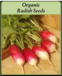 organic-radish-seeds-logo.png